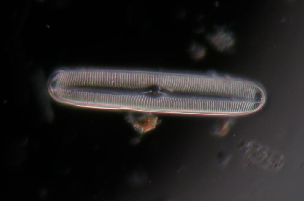 actu-nov17-chimie-naturellement-creative-Diatomée