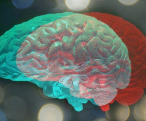 Dans les laboratoires de neurosciences du Collège de France